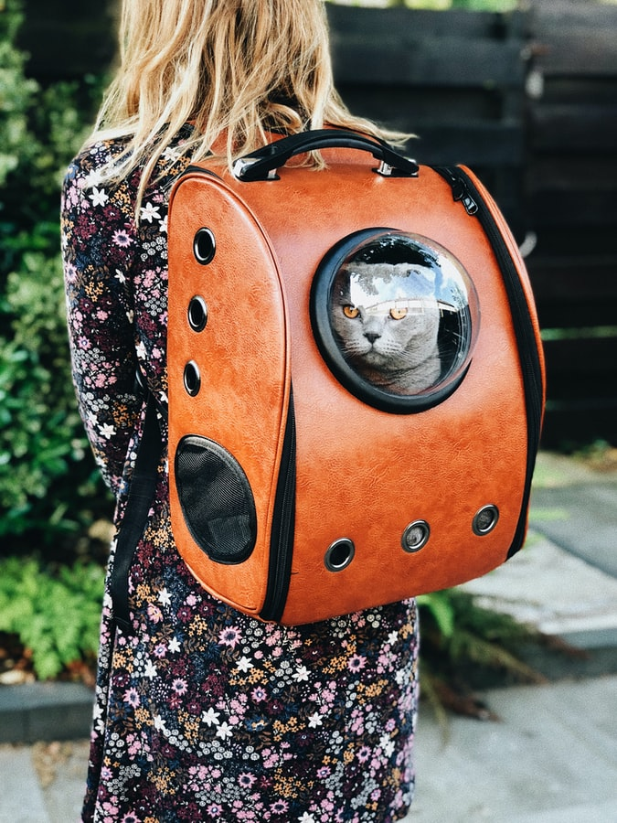 gifts for cat owners